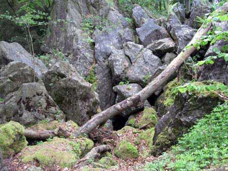 Baum - Felsen