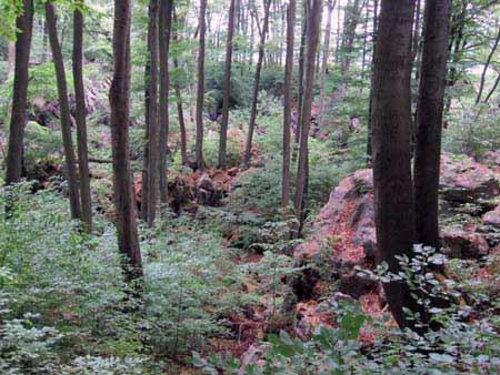 Felsenmeer Hemer - Felsen Wald