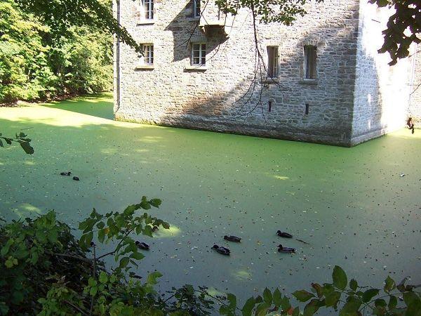 Burggraben des Wasserschlosses