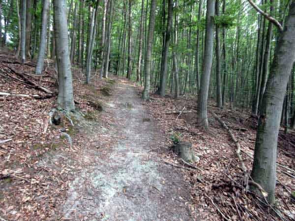 Waldweg Aabachtal