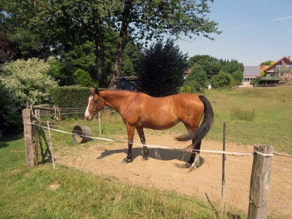 Pferd am Wegesrand
