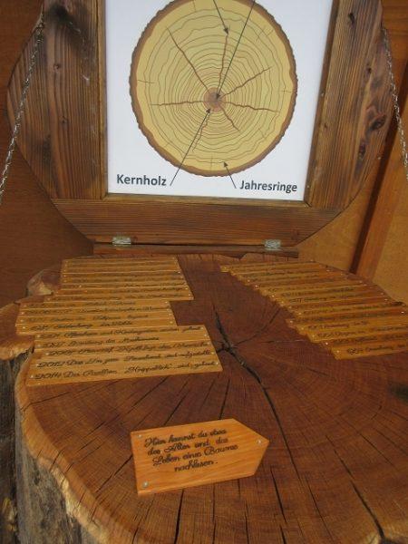 Info über Holzkunde
