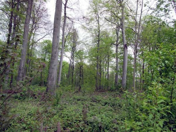 Grävingholz Wald, Dortmund