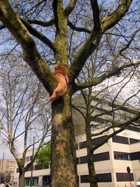Wie kommt der Löwe auf den Baum?