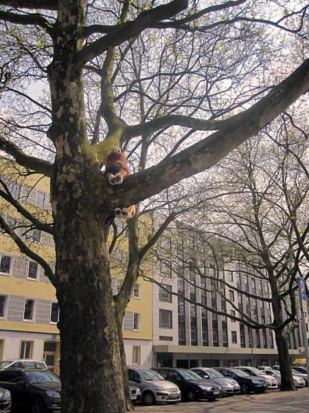 Ist er dem Duisburger Zoo entronnen?