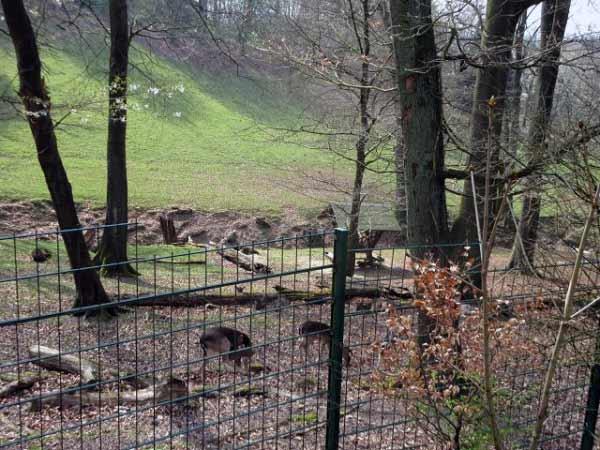 Rehe und Hirsche - Gehege