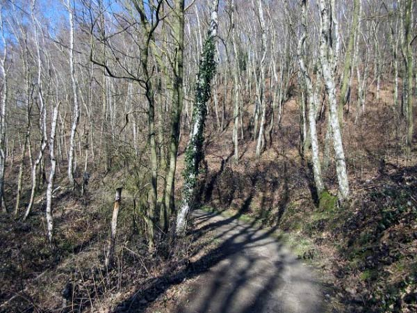 Birkenwald Klusenberg