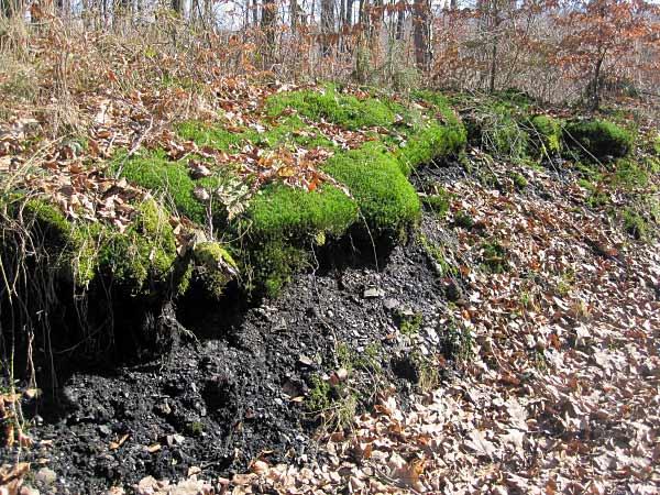 Kohle dicht unter der Erdoberfläche