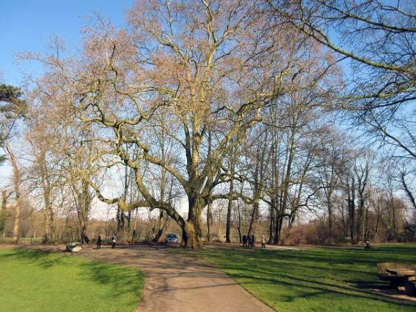 Schlosspark Paffendorf - Alte Bäume am Rundweg