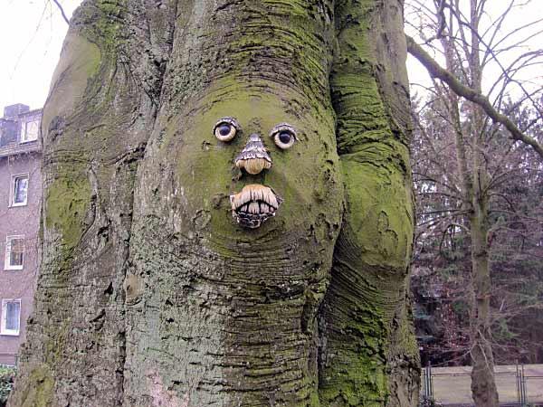 Baum im Park der Villa Bönnhoff